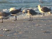 Watch free video Seagulls at Beach