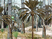 Chơi trò chơi miễn phí Sabrina on Fraser Island