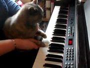 Watch free video Darla Plays the Piano