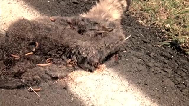 Watch free video Westwood College: Road Kill Detective (Todd)