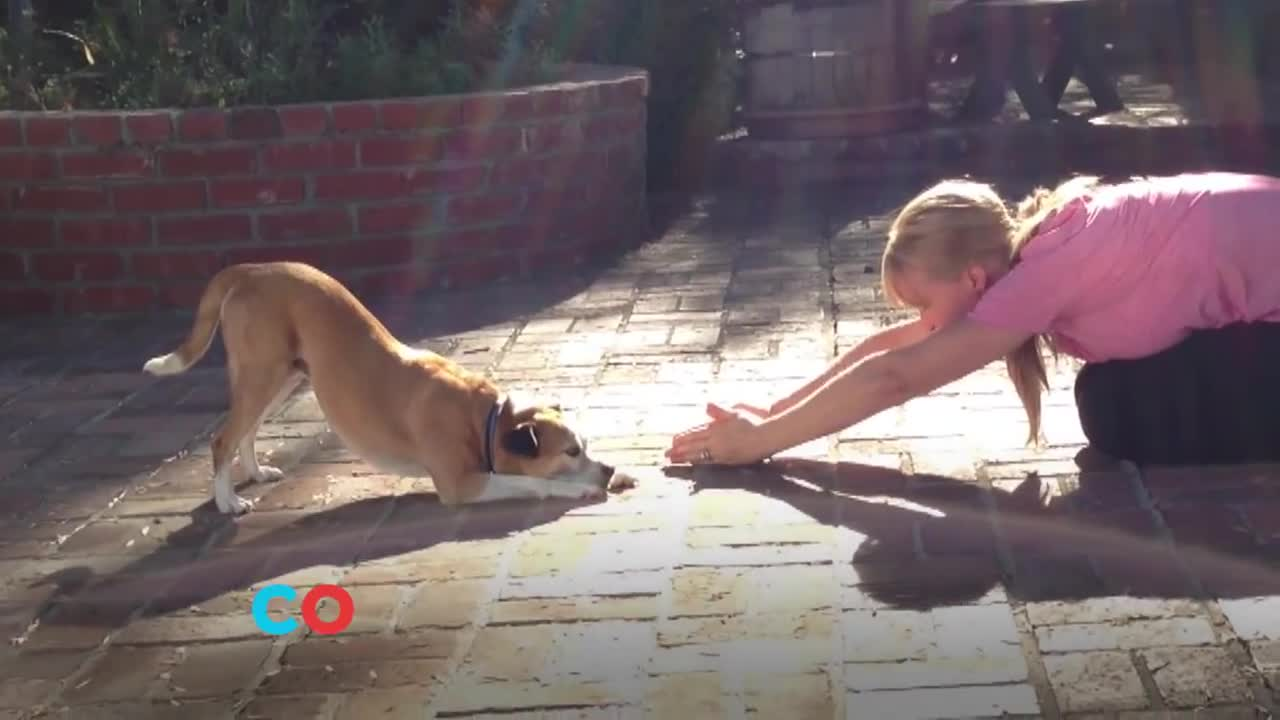 Watch free video PetCo Commercial: The Power of Together