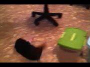 Watch free video Funny Mini Piggy Tales 1