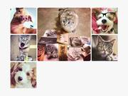 Watch free video Best Friends Animal Society Video: Celebrity Pets