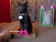 Watch free video Poopy Cat Dolls Video: Do You Want My Purr Purr?