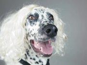 Watch free video Mini Pupstars Video: Kids vs Dogs
