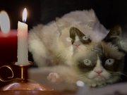 無料アニメのCelebrity Cats: Hard To Be a Cat at Christmasを見る