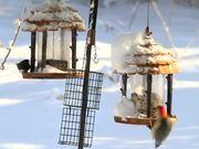 Watch free video Birds On Feeders