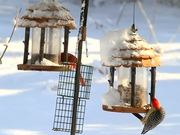 Watch free video Birds On Feeders