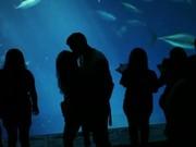 Watch free video Monterey Bay Aquarium