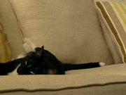 Watch free video Cat Fighting Sleep