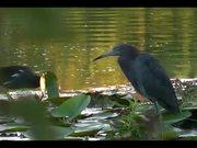 Watch free video Wild Birds