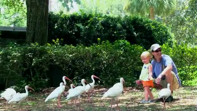 Watch free video Father and Daughter Feeding the Birds