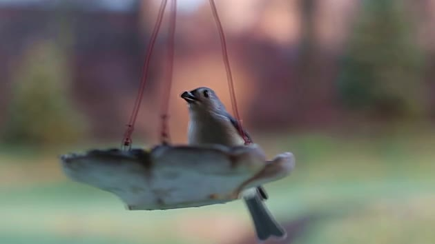 Watch free video Birds and Feeder