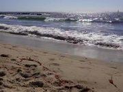 Watch free video Waves Crashing on California Beach
