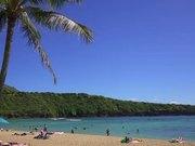 Watch free video Palm Tree in Hawaii