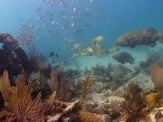 Mira el vídeo gratis de Dry Tortugas National Park