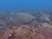 Mira el vídeo gratis de Tropical Scuba Diving
