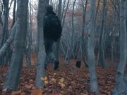 Watch free video Hiking at the Forest