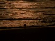 Watch free video Sea Waves at Sunset