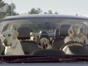 Watch free video Subaru Campaign: Dog Tested