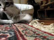 """Watch free video """"I'm A Cat"""" Song"""