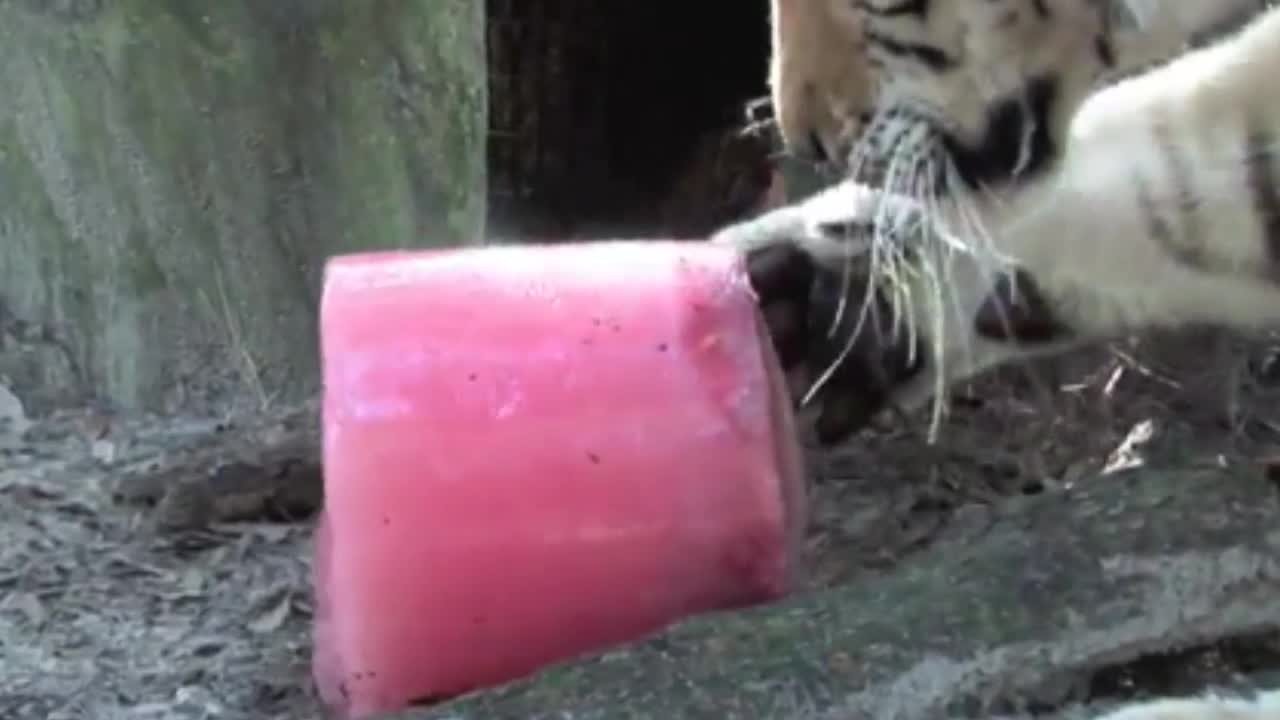 Watch free video How To Make a TIGER POPSICLE!