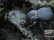 Watch free video Predator Bugs in Macro View Ultra HD