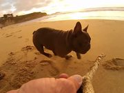 Watch free video GoPro Campaign: Chicken The Dog