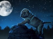 Watch free video Pedigree Commercial: Share for Dogs