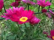 Watch free video Flowers Water Drops