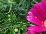 Watch free video Flowers Water Drops