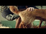 Watch free video Granola Commercial: The Taxidermist