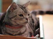 Mira dibujos animados gratis Friskies Viral Video: Dear Kitten