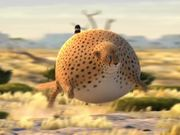 Mira dibujos animados gratis Kyra & Constantin Video: Rollin Wild