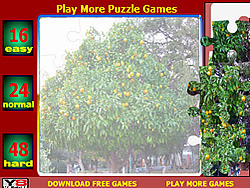 Orange Tree Jigsaw Puzzle game