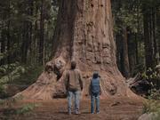 Watch free video Subaru Campaign: Bison