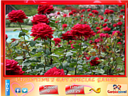 Puzzle Craze - Rose Garden