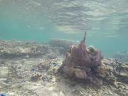 Mira dibujos animados gratis Snorkelling with Little Blue Fishes