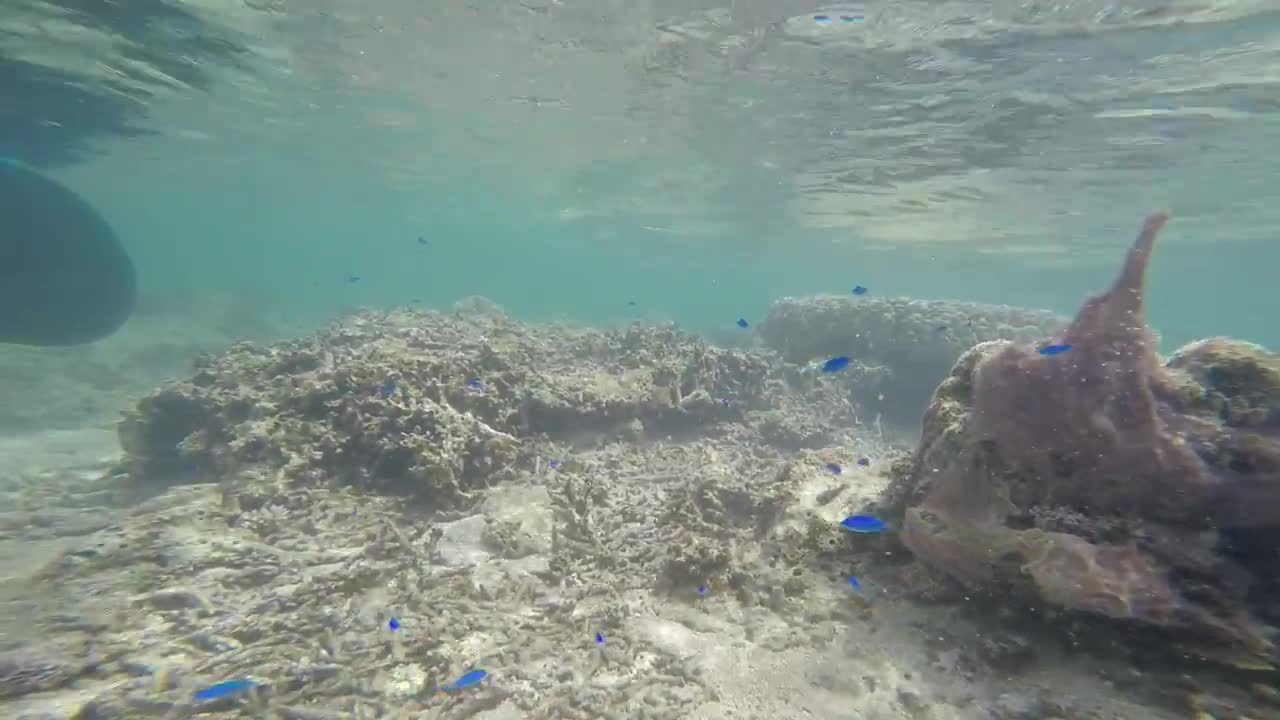Watch free video Snorkelling with Little Blue Fishes