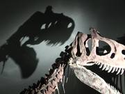 Watch free video Dinosaur in Museum