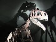 Watch free video Dinosaur in Museum