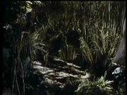 Watch free video Jungle Book