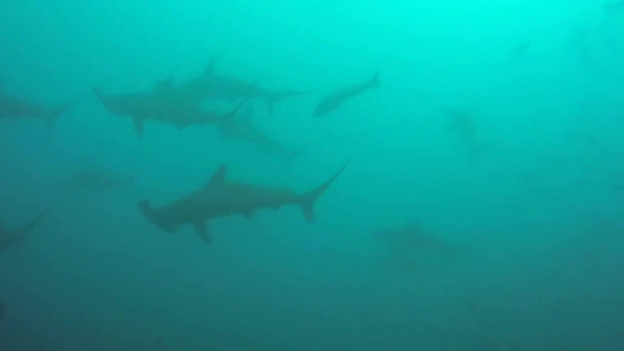 Watch free video Cocos Island Dive Trip 2014