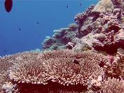 Mira el vídeo gratis de Pretty Reefs of Palau