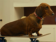 Watch free video Wiener-Dog Official Trailer