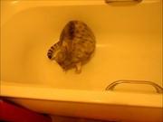 Mira el vídeo gratis de Murphy Chillin In The Bath Xvid