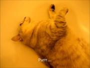 Murphy Chillin In The Bath Xvid