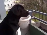 Watch free video Dog Imitates Siren