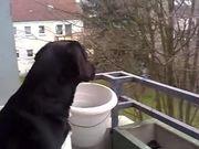Watch free video Dog Imitates Siren