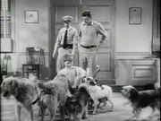 Watch free video The Andy Griffith Show: Dogs Dogs Dogs